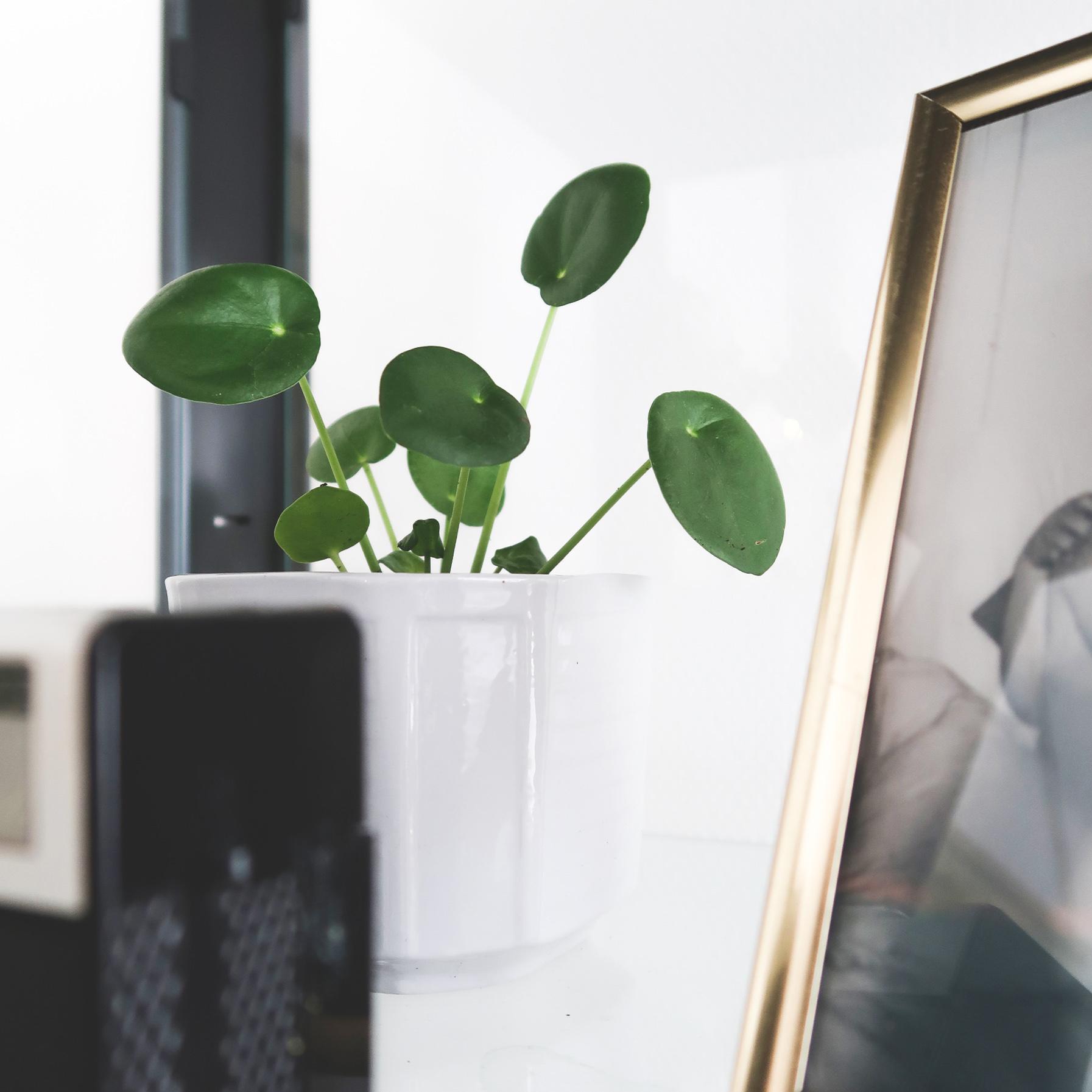 pileapannenkoekplant2